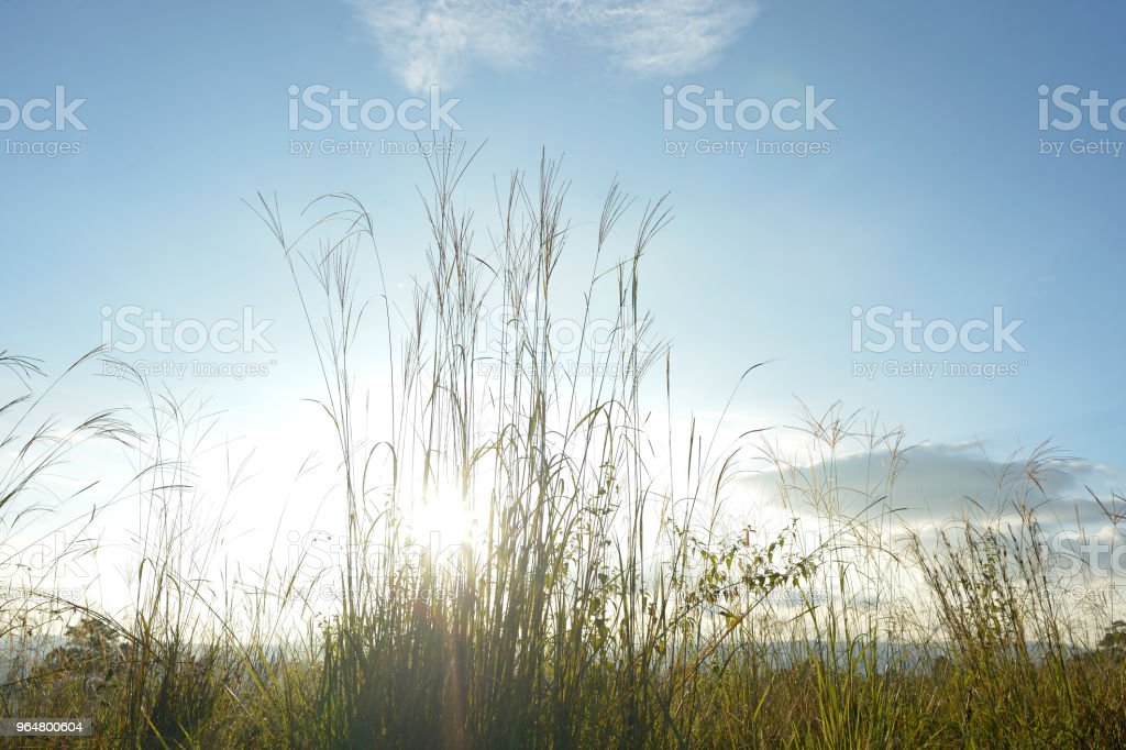 grass with light royalty-free stock photo