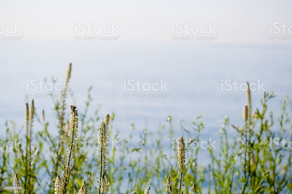 Grass with Sea as Background royalty-free stock photo
