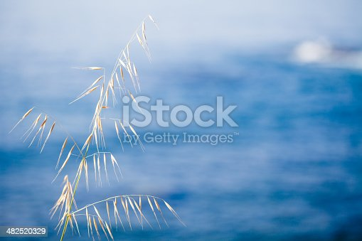 Grass with Sea as Background