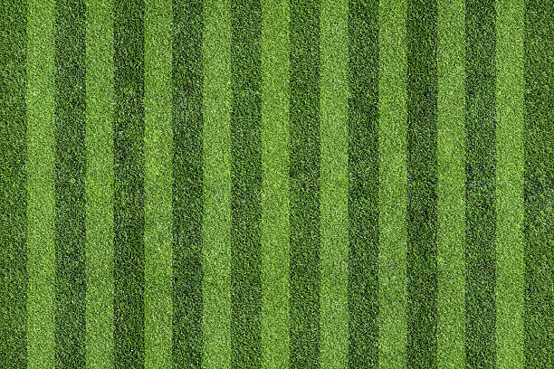 Grass with sections striped darker and lighter green stock photo