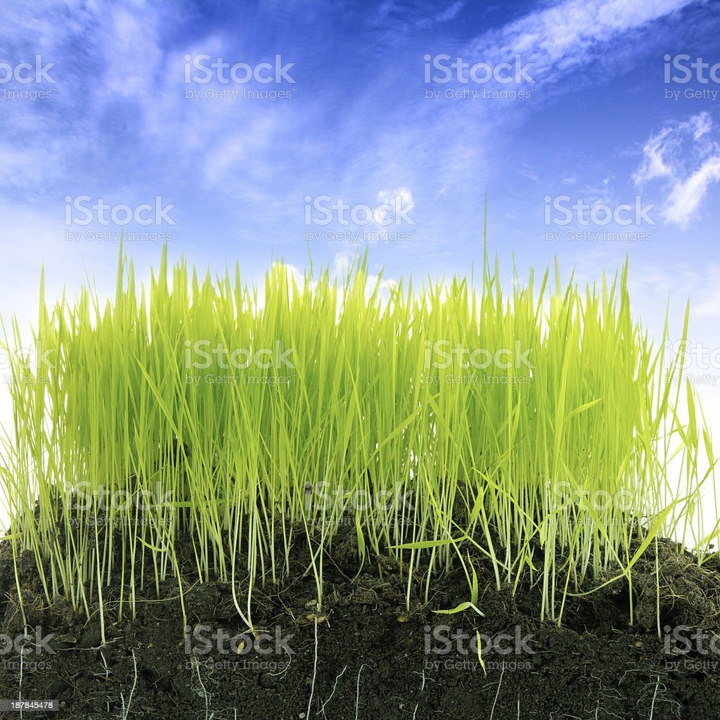 Grass with soil royalty-free stock photo