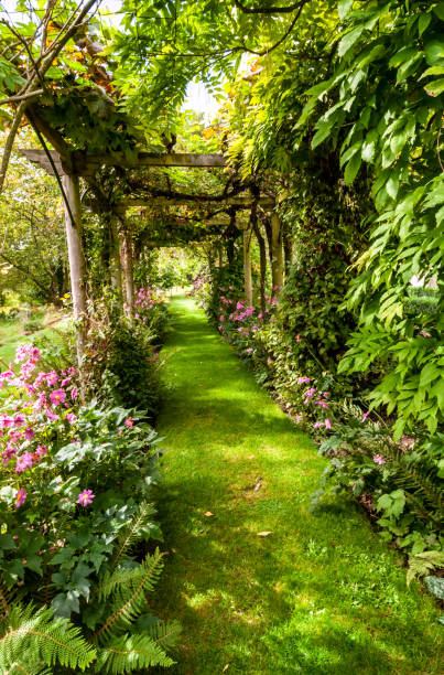 a  grassed path under a vine-covered pergola-archway makes a verdant mysterious shady avenue. flower beds and ferns adorn the sides. - ozdobny zdjęcia i obrazy z banku zdjęć