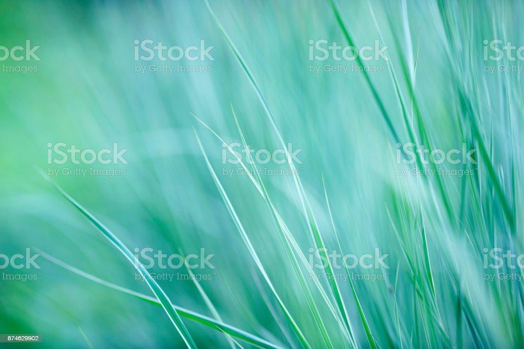 Grasses against defocused background stock photo