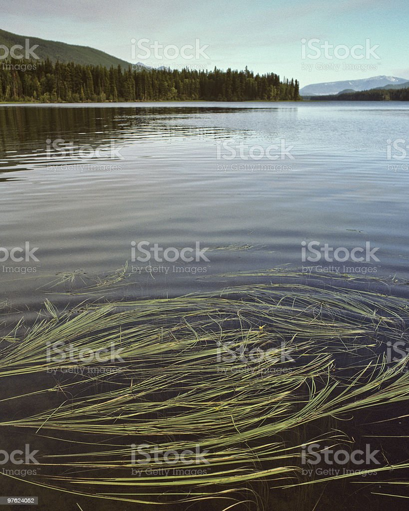 Grasses and Reflected Mountains royalty-free stock photo