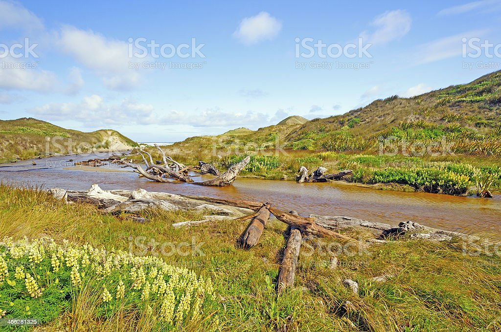 Grasses and stream through Sand Dunes stock photo