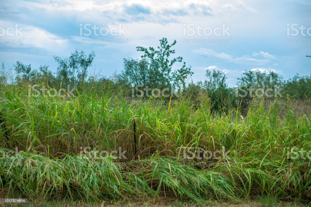grasses and trees on roadside stock photo