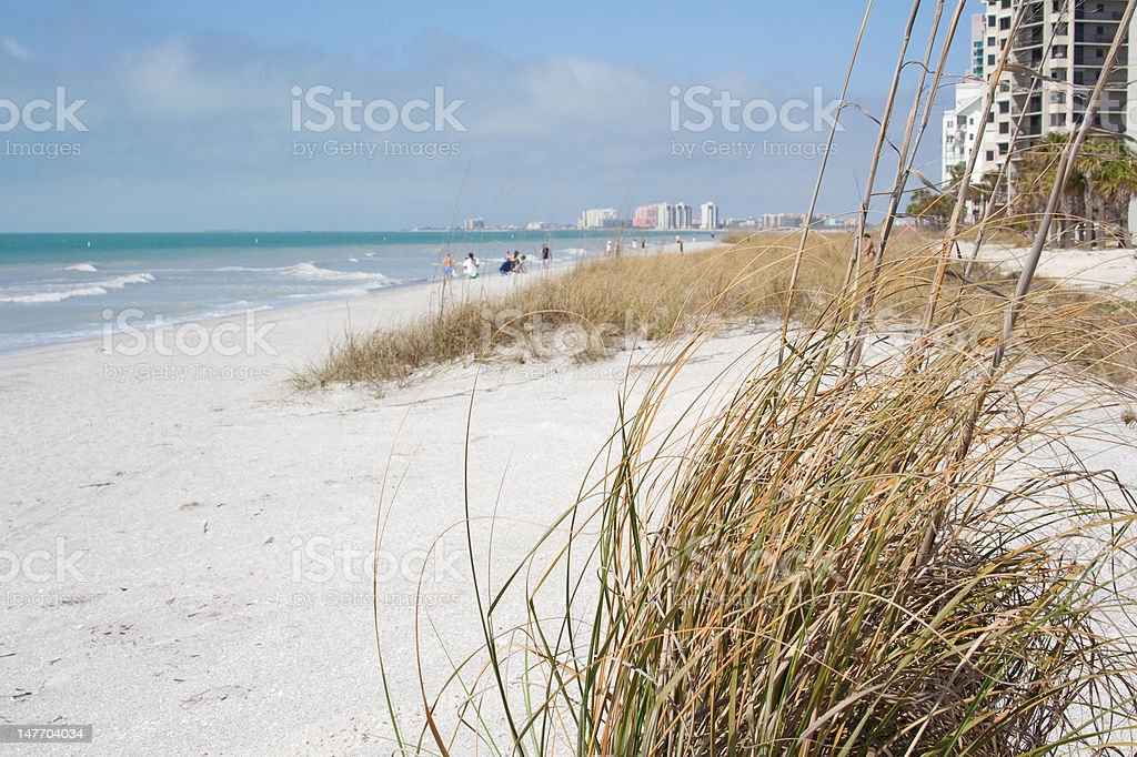 grasses at beach stock photo
