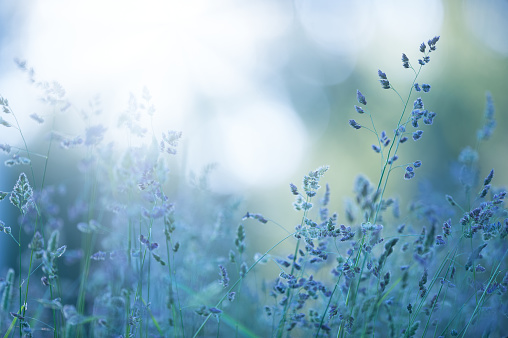 istock Grasses in the meadow 922449104