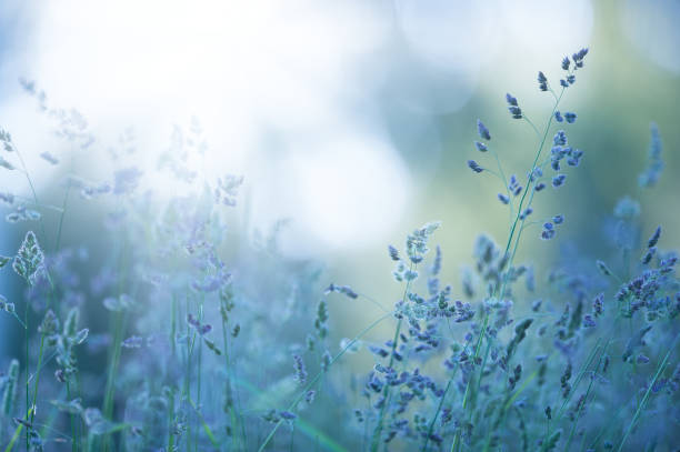 grasses in the meadow - soft focus stock photos and pictures