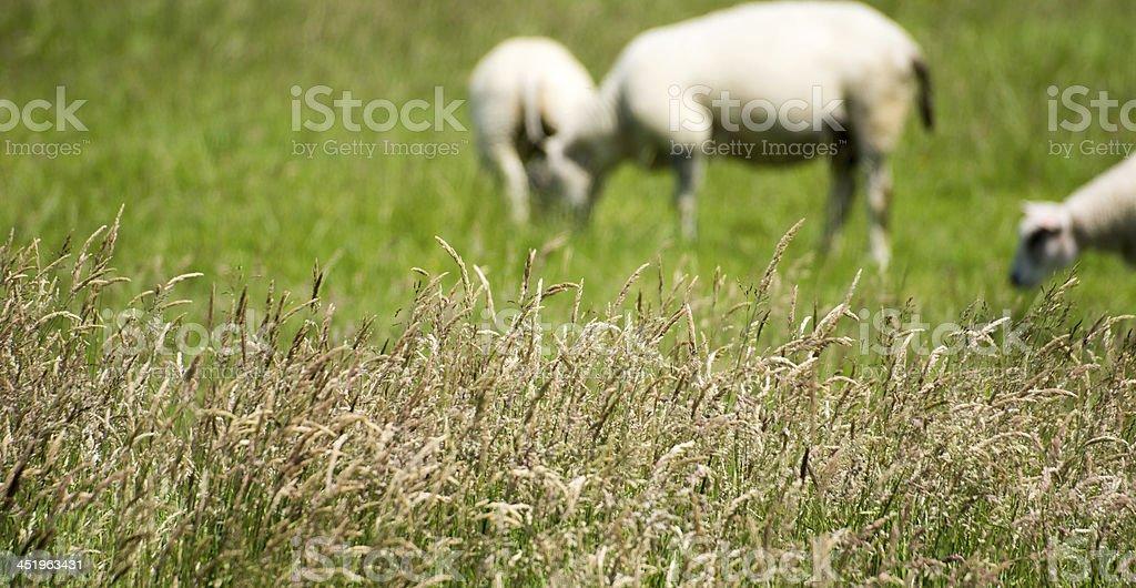 Grasses royalty-free stock photo
