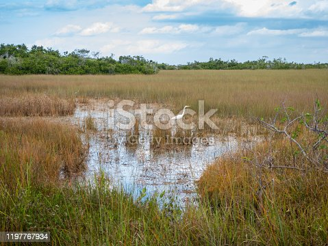Grasses, trees, and a hunting egret in Everglades National Park, Miami, Florida, USA
