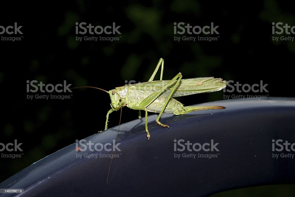Grasshopper and little spider royalty-free stock photo