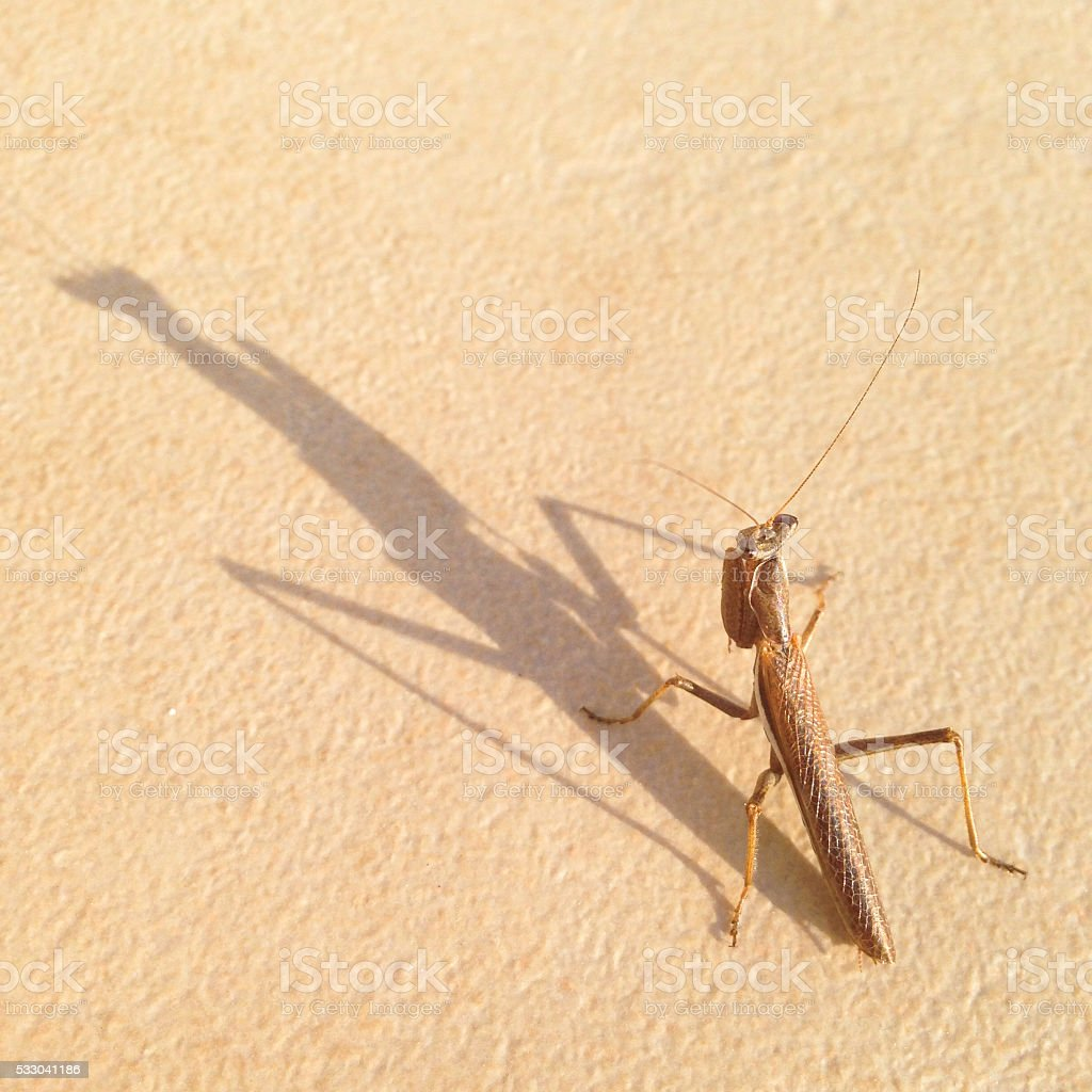 Grasshopper and long shadow. stock photo