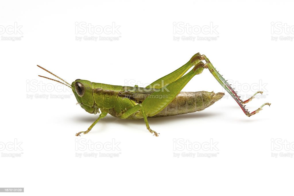 Grasshopper in front stock photo