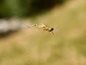 istock Grasshopper in the jump 139257665