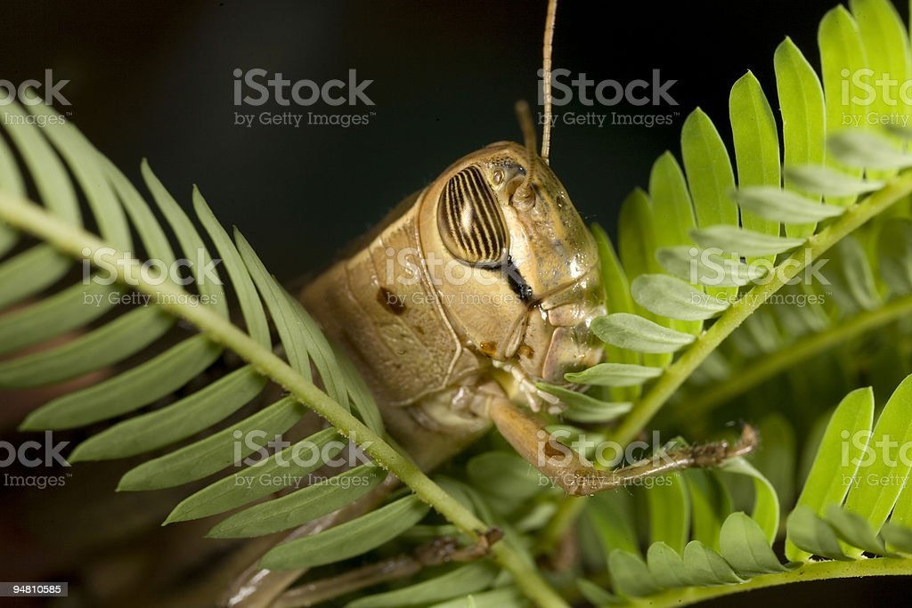 grasshopper on a fern stock photo
