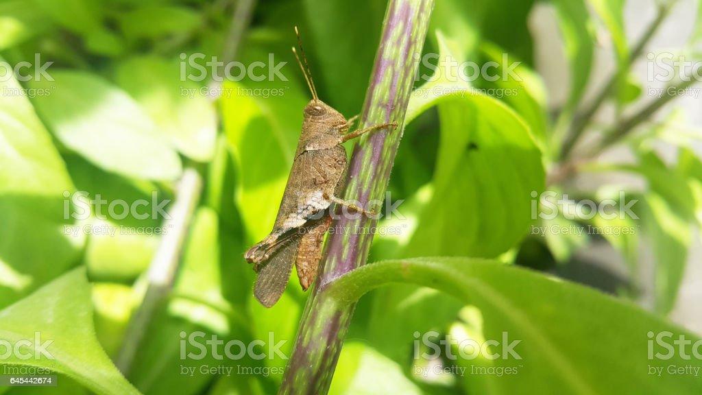 Grasshopper on a green leaf stock photo