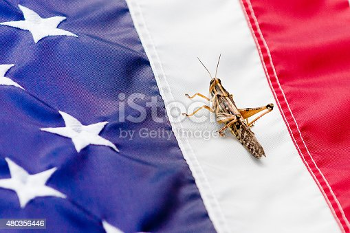 Grasshopper perched on first white stripe between the star field and the red stripe on the USA flag.