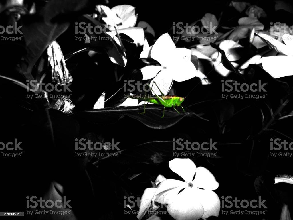 Grasshopper on flowers stock photo