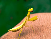 Grasshopper on green background