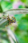 Grasshopper on the grass. stock photo