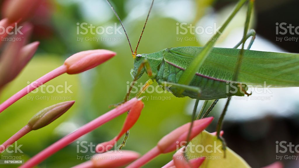 Grasshopper perched on stock photo