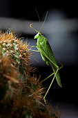 grasshopper on the cactus