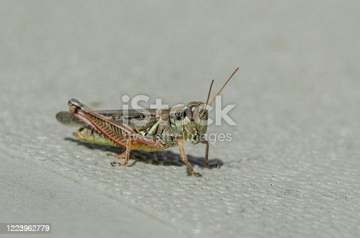 Up close image of a grasshopper