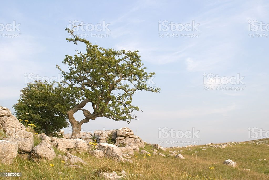 Grassington Moor area, Yorkshire Dales royalty-free stock photo