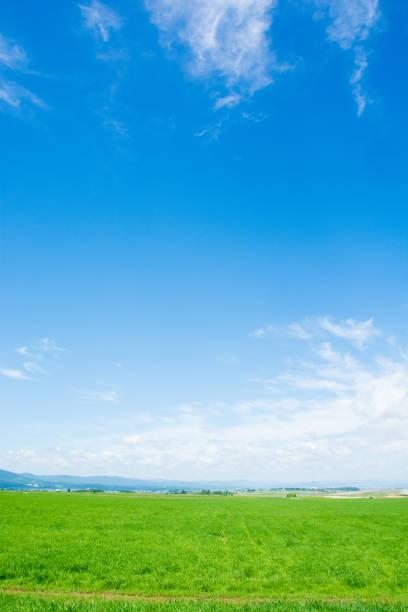 草原、ブルースカイ  - 北海道 ストックフォトと画像