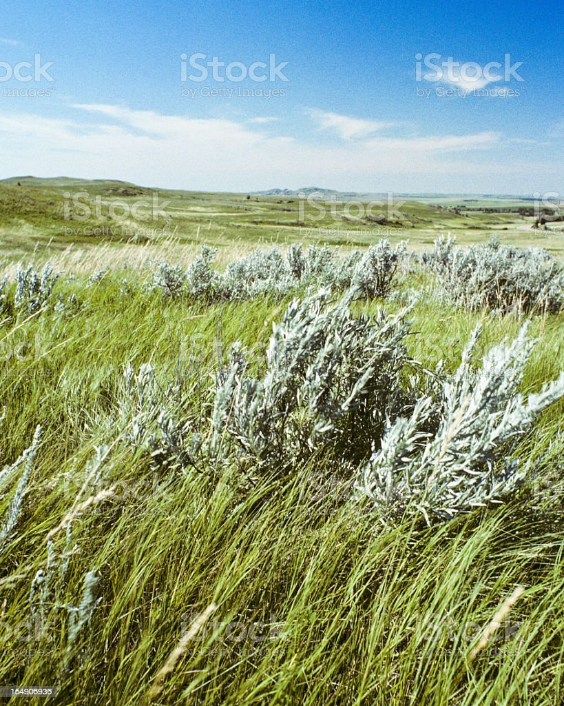 Grassland and sagebrush on a sunny day royalty-free stock photo