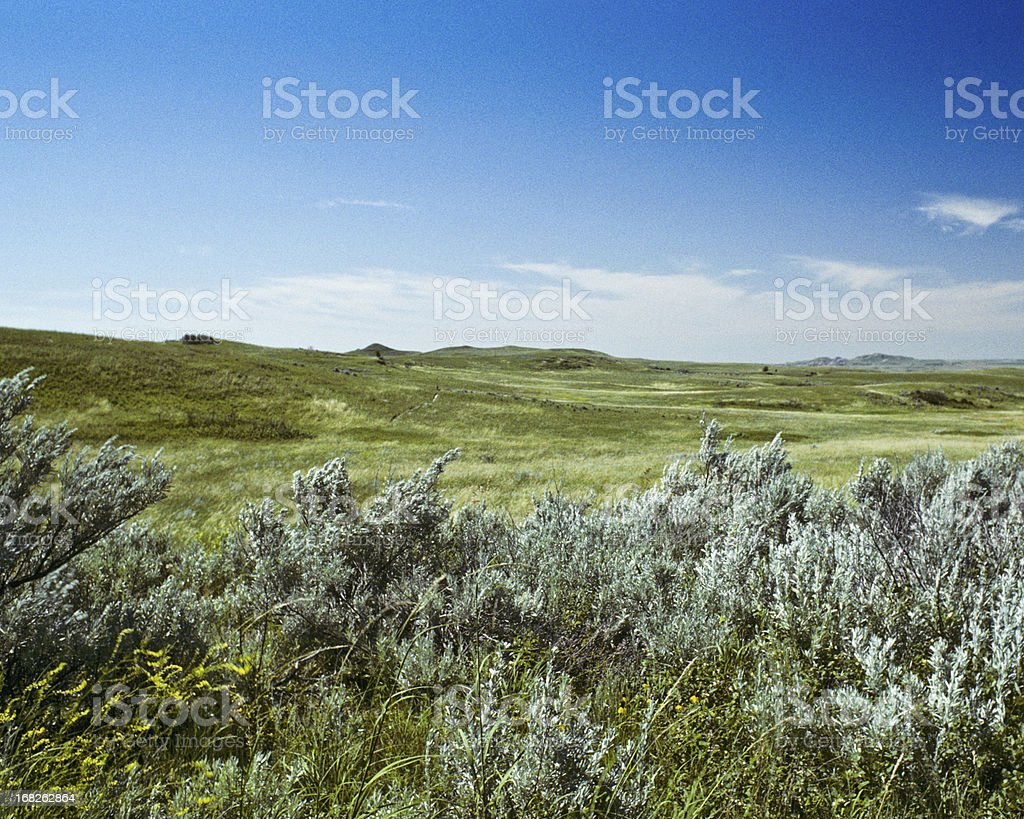 Grassland and Sagebrush royalty-free stock photo