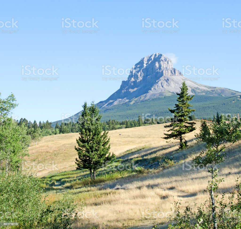 Grassland and summer view Crowsnest Mountain stock photo