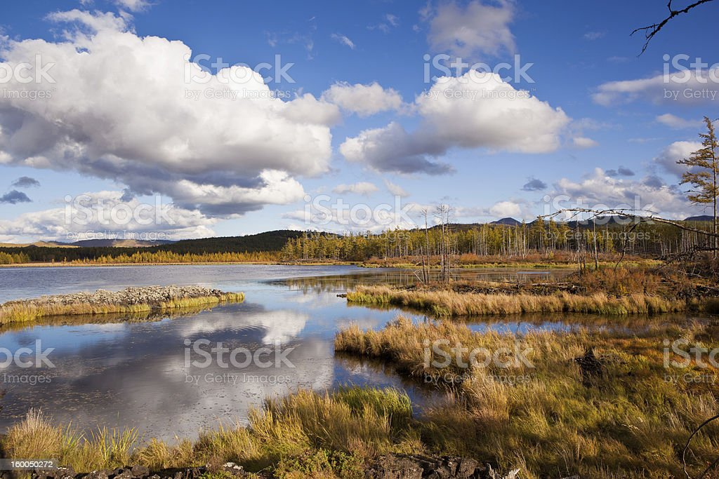Grassland and wetland royalty-free stock photo