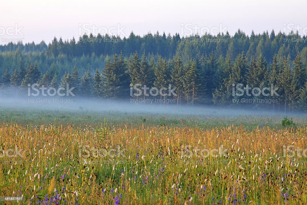 grassland and woods in fog at morning stock photo