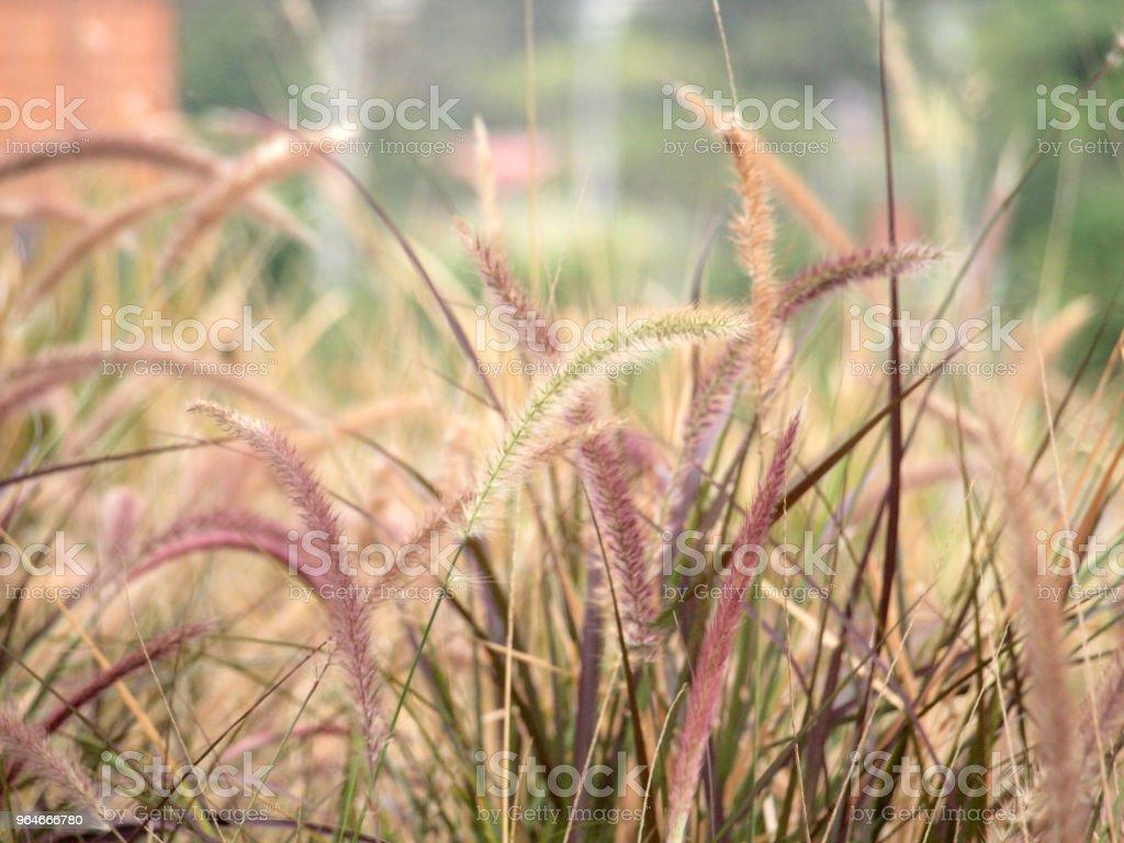 grassland background royalty-free stock photo