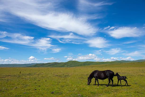 grassland in Tibet – Foto