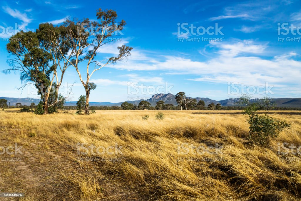 Grassland landscape in the bush with Grampians mountains in the background, Victoria, Australia - Royalty-free Animal Wildlife Stock Photo