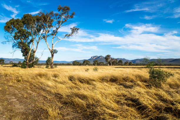 Grassland landscape in the bush with Grampians mountains in the background, Victoria, Australia stock photo