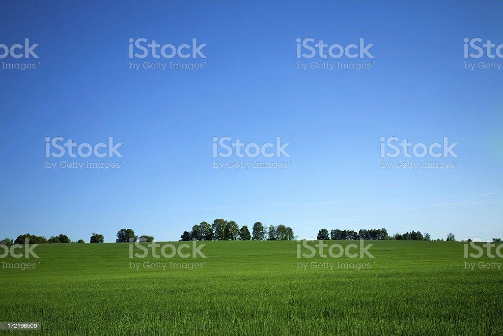 Grassland Landscape royalty-free stock photo