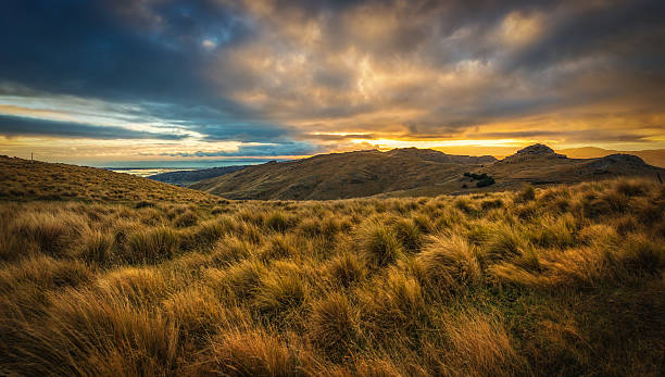 Grassland Of Mount Pleasant, Christchurch stock photo
