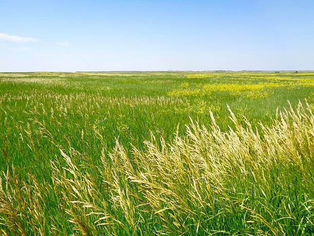 grassland - great plains stock photos and pictures