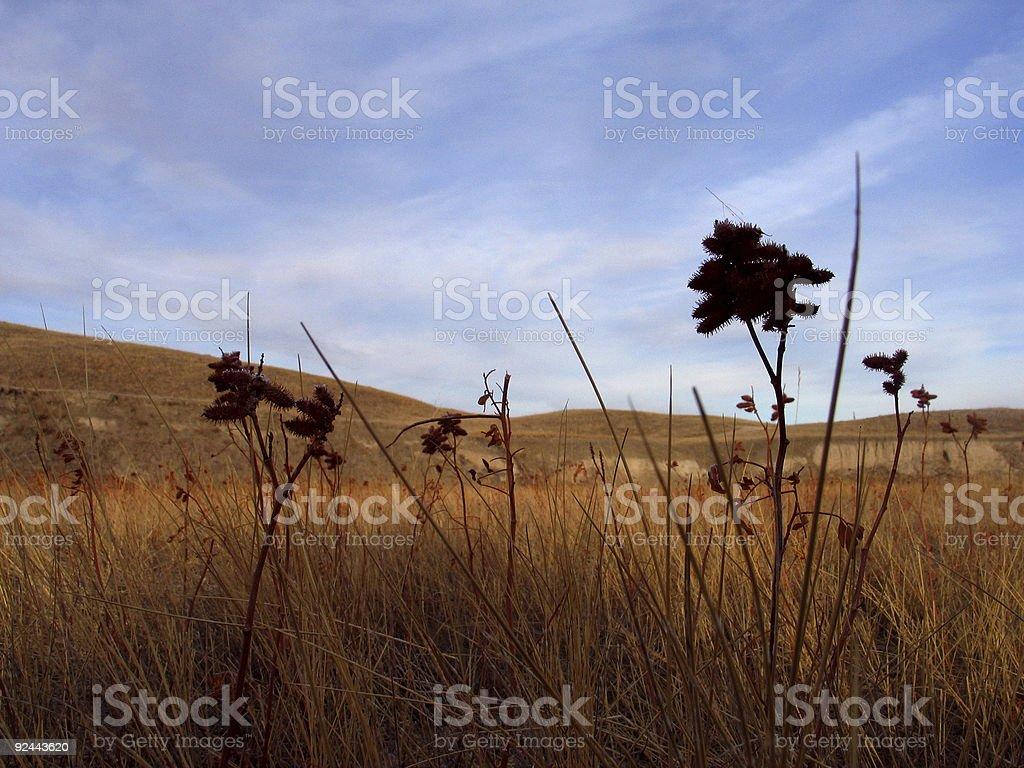 grassland plants stock photo