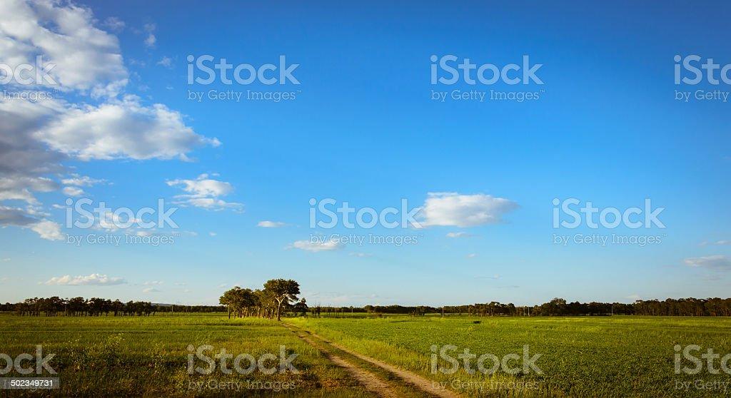 grassland scenes royalty-free stock photo