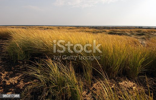 A series of grassland, tidal and marsh land shots.