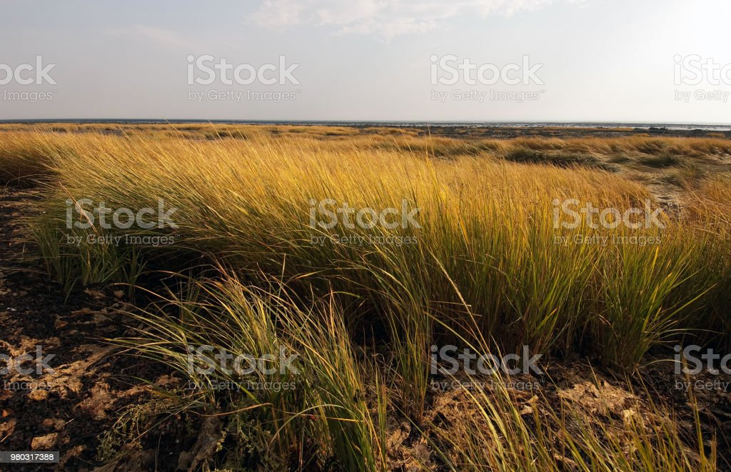 Grassland, tidal marsh. stock photo
