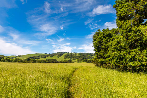 Grassland with path and tree stock photo