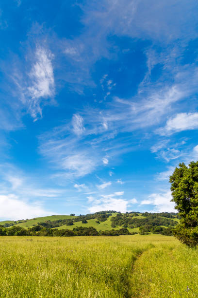 Grassland with path and tree Vertical stock photo