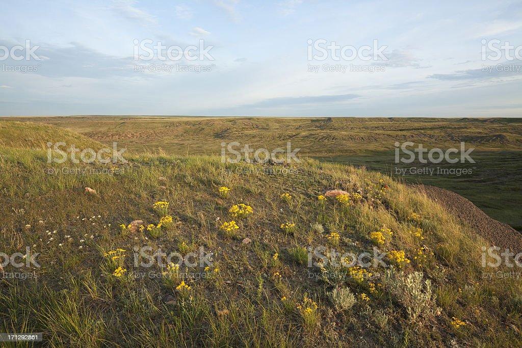 Grasslands National Park royalty-free stock photo