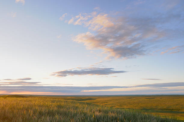 grasslands - great plains stock photos and pictures